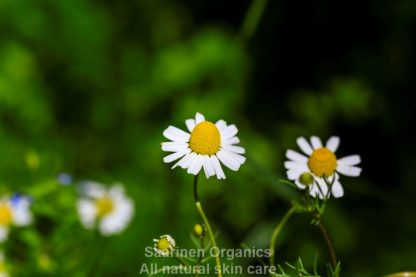 eco-seed-to-skin-care-Chamomile