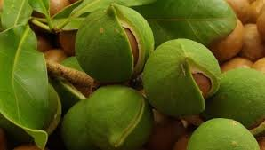 eco-seed-to-skin-care-macadamia-nuts